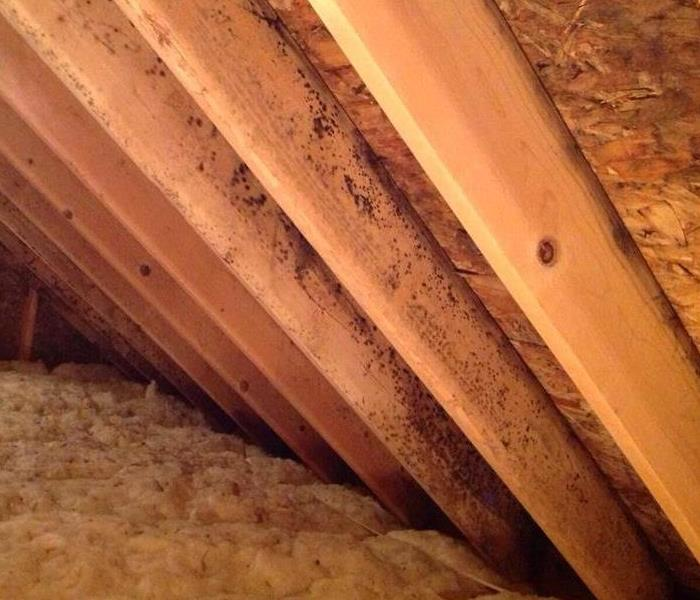 Mold in Attic  Before