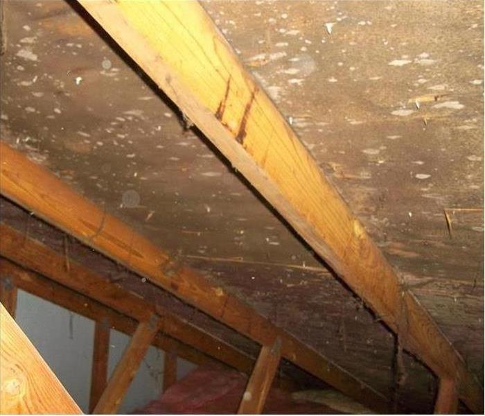 Attic Mold Before SERVPRO